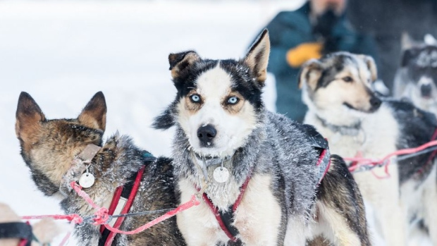 The Yukon Quest is an annual 1,600 km sled dog race between Whitehorse and Faribanks, Alaska. This winter