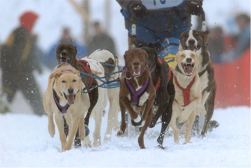 Sled Dog Central Fun Photos Page 18