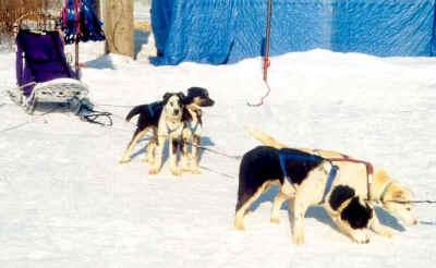Alden west dog photos