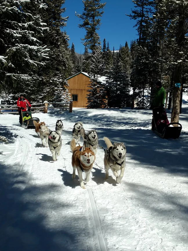 A dog sled team on the trail