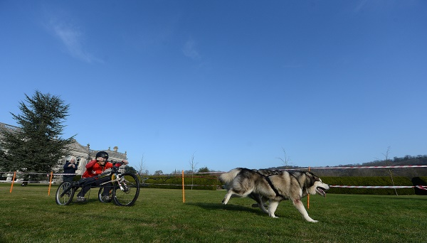 Two Siberan Huskies race around the course at the Phoenix Winter Games