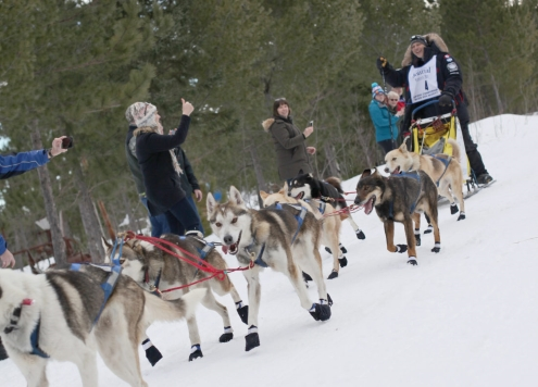 Martin Massicotte and his sled dog team finish second in the U.P. 200 on Sunday morning, Feb. 19, 2017, at Lakenenland. (Journal photo by Jess Makela)