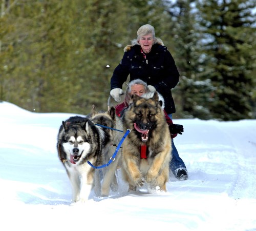 Barb Nystrom, standing, and Georgina Vellenoweth laugh as their dog sled team races through the snow last winter. (Sherry Rosser photo)