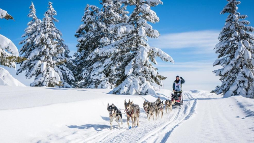 Laurie Warren, of Council, Idaho. (Courtesy Photographer Melissa Shelby and the Idaho Sled Dog Challenge)