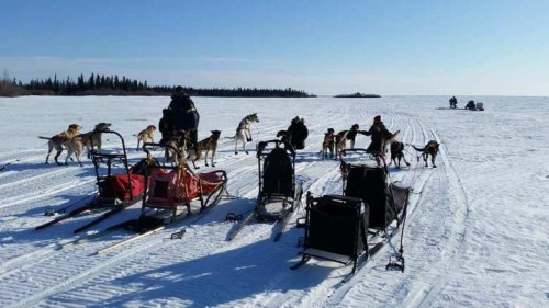 When Kathy Beaupré tried dogsledding for the first time – in Ontario in 1998 – she fell in love with it and gathered together an unlikely team of two Alaskan huskies, a collie mix, and a whippet.