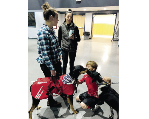 Rachael Colbath holds the leash as Pepperjack and Anchovy give a Laconia Middle School student a kiss after a presentation about sled dog racing on Wednesday at the school. (Michael Mortensen/Laconia Daily Sun)