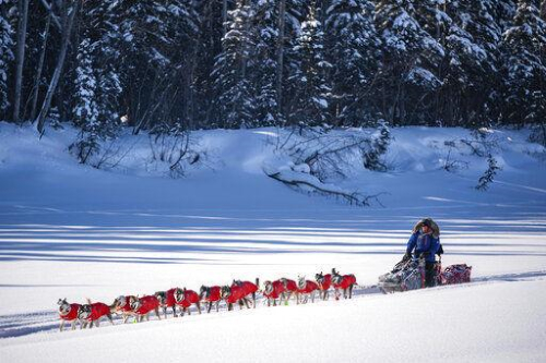 Mitch Seavey mushes into the Nikolai, Alaska, checkpoint Tuesday during the Iditarod Trail Sled Dog Race.