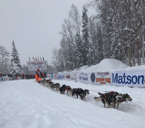 One of 57 mushers gets ready to depart from the Willow race restart in the 2020 Iditarod. Photo from Davis Hovey, KNOM (2020)