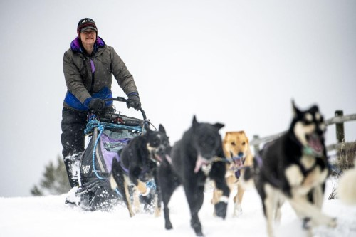 Seeley Lake musher Jessie Royer races out of Lincoln in the 35th annual Race to the Sky. Royer has placed first five times in the Race to the Sky as well as third place in the Iditarod.  BEN ALLAN SMITH, Missoulian