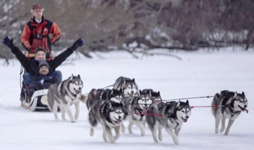 Sled Dog Sundays return to Long Lake's Birch's on the Lake on Feb. 21 and 28. Jack Christopher and his team of dogs take ticketed customers around the lake on a sled. Photo Courtesy of Birch's on the Lake