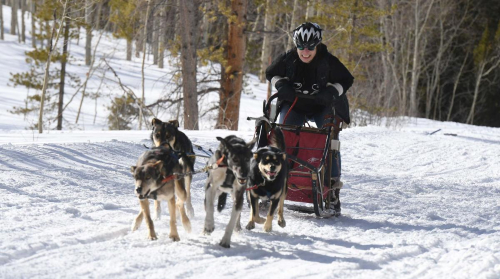 After some quick instruction from Michael Sullivan, Gazette reporter Stephanie Earls heads out with her dog team of four near Leadville. Photo Credit: Jerilee Bennett, The Gazette.
