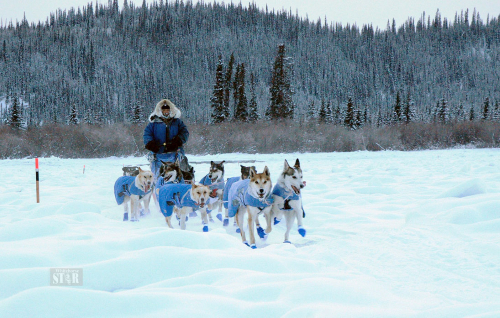 FIFTEEN REMAIN – Three mushers have dropped from the 2020 Yukon Quest 1,000-mile race leaving 15 teams. It is the lowest number of teams in the race