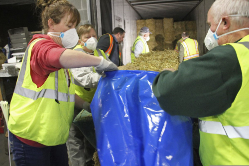 Sarah Koonce, left, of Anchorage, Alaska, and Greg Czarnecki, of Wasilla, Alaska, are among volunteers stuffing bales of hay inside plastic bags in Anchorage, Alaska, Thursday, Feb. 13, 2020. About 1,500 bales will be flown to checkpoints along the Iditarod Trail Sled Dog Race, which begins March 7, and will be put down on the snow and ice so the canine participants in the race have a warm place to sleep. (AP Photo/Mark Thiessen)