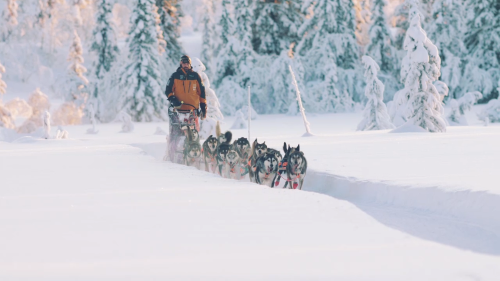 The Sport of Dog Mushing Reaches New Heights through Global Media Distribution