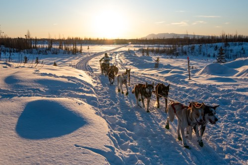 The Junior Iditarod, the longest race in Alaska for competitors under 18, is a chance for young mushers to prove their skills.<br/>  Marlena Sloss for The New York Times