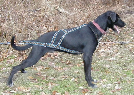 Sled Dog Central: New Product Info: Howling Dog Wheel Dog Harness