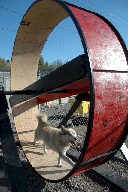 Sled Dog Central Fun Photos Page 32