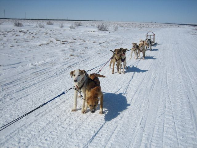 Sled Dog Central Fun Photos Page 17
