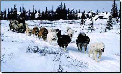 Dog Transport Canada