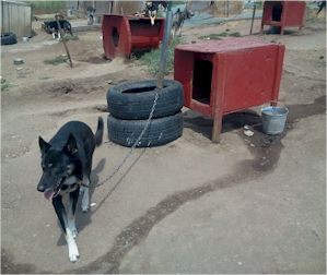 Cheap Car Tires >> Sled Dog Central: Kennel Tips - Dog Yard